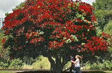 heraldtree