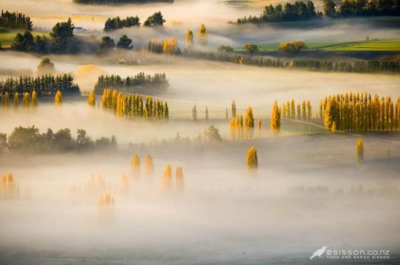 New Zealand Photos | Golden Autumn Poplar Trees & Fog Lake Wanaka NZ