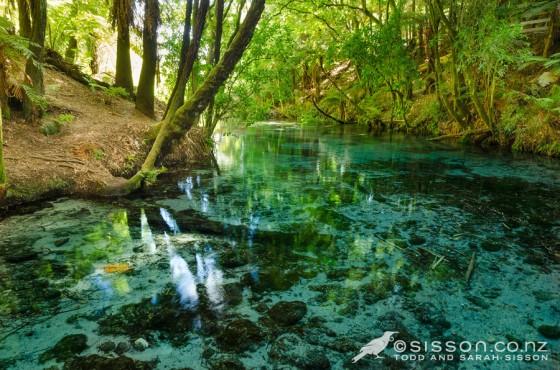 Hamurana Springs - Rotorua, New Zealand