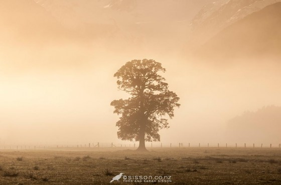Early morning mist near Fox Glacier.  West Coast, South Island New Zealand.  Photography by Todd Sisson.