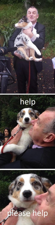 mallard dog